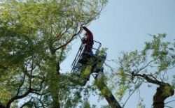 Afronding bomensnoei en Uitvoering 2e fase Bomenplan Zilverkamp